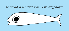 About The Grunion Run Groomsmen Shop